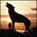 wolferblade
